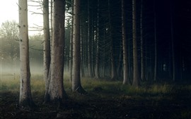 Preview wallpaper Forest, trunks, fog, morning