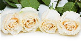 Preview wallpaper Four white roses