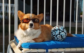 Preview wallpaper Funny dog, glasses, ball