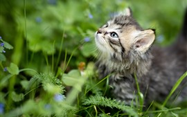 Preview wallpaper Furry kitten look up, plants, green background