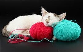 Пушистый котенок спит, шерстяная нить