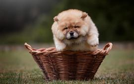 Vista frontal del cachorro peludo, cesta, prado