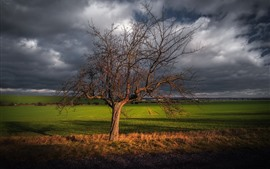 Germany, Thuringia, Haarhausen, lonely trees, fields