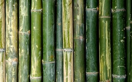 Preview wallpaper Green bamboo texture background