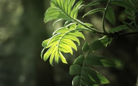 Preview wallpaper Green fern leaves, sunshine