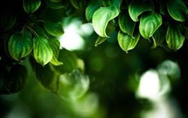 Green leaves, hazy background, spring