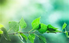 Hojas verdes, ramitas, fondo borroso