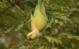 Preview wallpaper Green parrot, tree, leaves