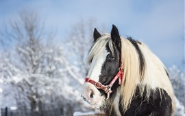 Preview wallpaper Horse, head, eyes, mane, snow, winter