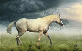 Cavalo que anda na pastagem, árvores, névoa, nuvens, manhã
