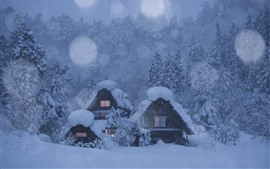 Preview wallpaper Japan, Shirakawa-go, village, houses, trees, thick snow, winter