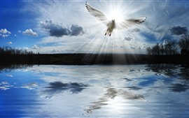 Preview wallpaper Lake, clouds, dove, sun rays
