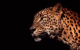 Preview wallpaper Leopard side view, head, black background