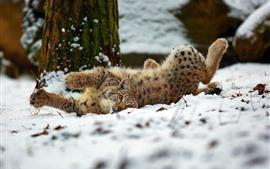 Рысь игривая на снегу