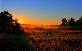 Manhã, árvores, grama, nevoeiro, amanhecer, amanhecer