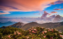 Montañas, flores rosas, nubes, atardecer.