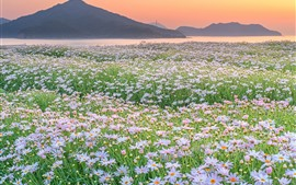 Preview wallpaper Mountains, river, wild flowers, spring, morning