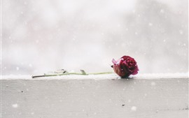 Preview wallpaper One red rose, snowy