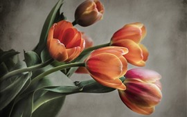 Tulipanes de naranja, de pared