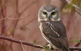 Owl look back, twigs, hazy