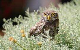 Owl look, ferns