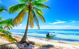 Palm trees, beach, boat, sea, blue sky, tropical, summer