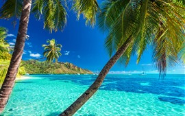 Palm trees, blue sea, summer