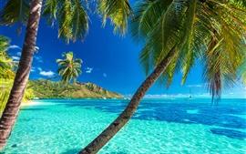 Palmeras, mar azul, verano.