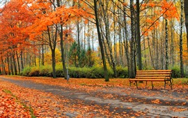 Preview wallpaper Park, trees, yellow leaves, bench, road, autumn