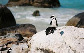 Pingüino, mar, rocas