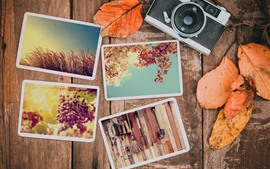 Preview wallpaper Photos, camera, leaves