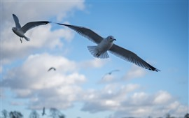 Preview wallpaper Pigeon flight, sky, clouds