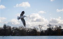 Vorschau des Hintergrundbilder Taubenflug, Flügel, See