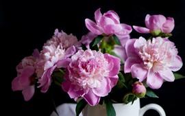 Peônias rosa, flores, vaso, gotas de água, nebuloso