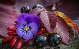 Preview wallpaper Purple flower, berries