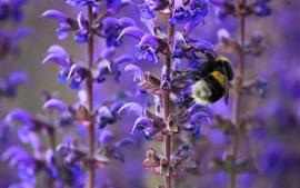 Flores moradas, tallo, abeja, insecto.