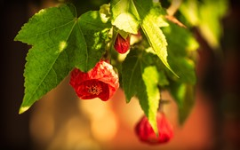Red flowers, green leaves