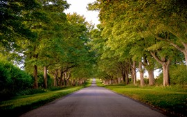 Preview wallpaper Road, trees, green, summer