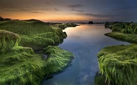Sea, coast, moss, water, sunset