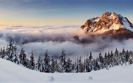 Slovakia, mountain, trees, clouds, snow, winter