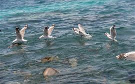 Некоторые чайки, море, вода