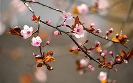 Весна, цветут розовые цветы, веточки, листья