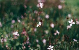 Весна, белые цветы, туманный фон