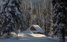 Aperçu fond d'écran Neige épaisse, maison, arbres, hiver, forêt