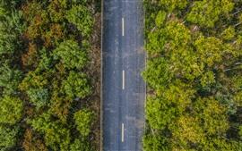 Vista superior, árboles, camino, otoño.