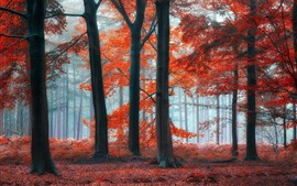 Preview wallpaper Trees, forest, red leaves, fog, morning
