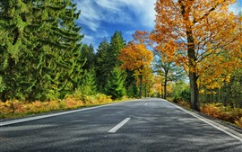 Preview wallpaper Trees, road, autumn, clouds