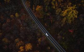 Árboles, camino, carro, vista superior.