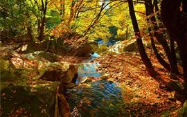 Árvores, folhas amarelas, fluxo, água, outono