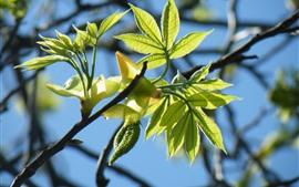 Galhos, folhas verdes, fundo azul